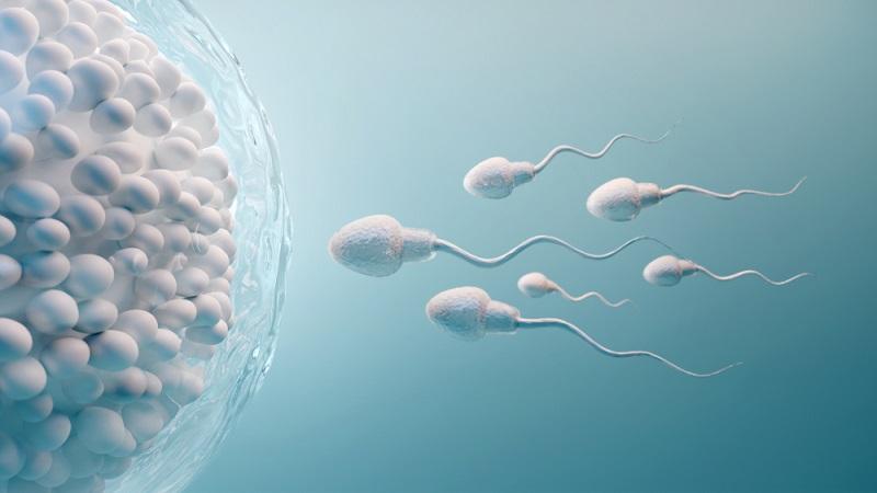 Should Men Take Prenatal Vitamins